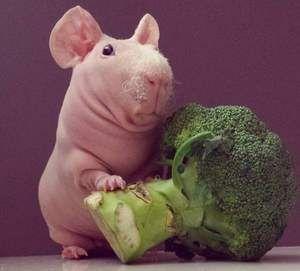 Brokolica a hubená