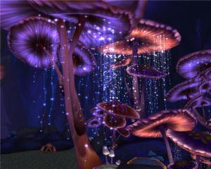 Vysvetlenie snov: prečo by ste mali vidieť huby vo sne? Sny a realita