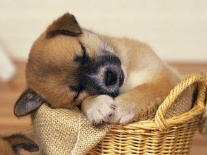 Interpretácia snov: malé šteňatko vo sne - o čom môžete snívať?