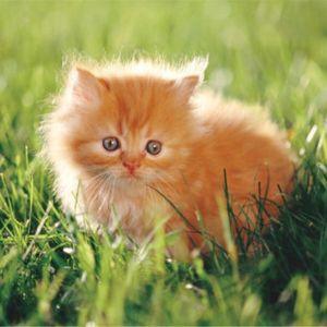 Sny o mačiatkach: čo sníva mačiatko?