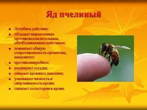 Výhody včelieho jedu