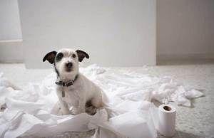 Pes a toaletný papier