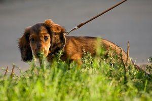 Zvyknutý dospelý pes na toalete na ulici