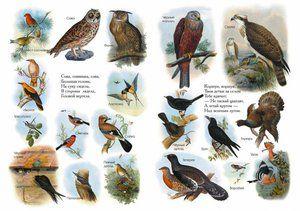 Zoznamy vtákov z encyklopédie