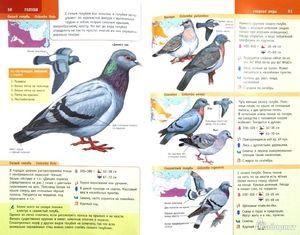Nómskych vtákov