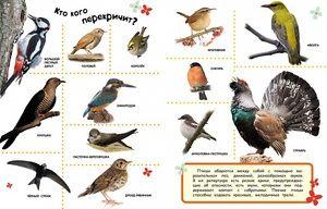 Ktoré vtáky neodletia do teplých krajín