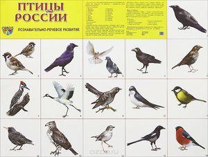 Vtáky na území Ruska