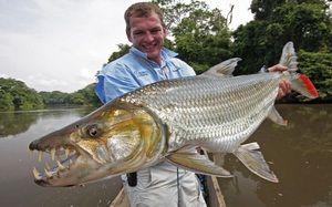 Tigerové ryby Goliáš: popis a vlastnosti