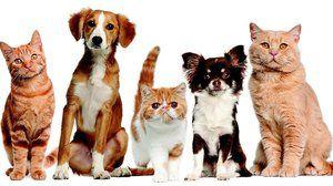 Liečivo na liečbu zvierat