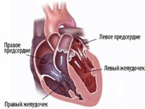 Srdce sa skladá z predsieň a komôr, ktoré vykonávajú svoje funkcie