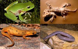 Evolúcia dala každému druhu najúčinnejšiu štruktúru
