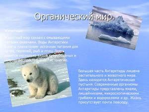 Unikátny živočíšny svet v Antarktíde