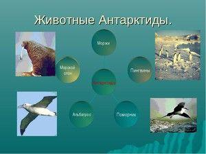 Zvierací svet Antarktídy