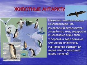 Unikátne zvieratá Antarktídy