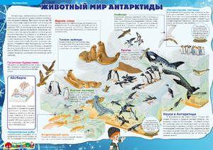 Aké zvieratá v Antarktíde