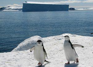 Tučniaky v Antarktíde
