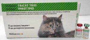 Nobivac vakcína pre mačky - návod na použitie