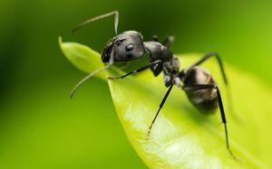 Druhy mravcov: štruktúra a popis