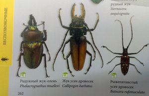 Typy hmyzu a ich mená