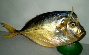 Ktoré ryby majú plochý tvar