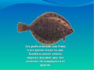 Vlastnosti plochých rýb
