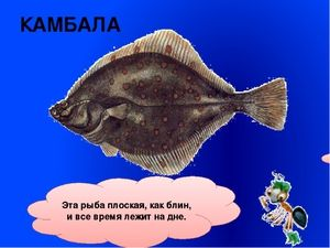 Ploché a okrúhle ryby
