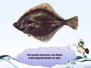 Opis plochých rýb