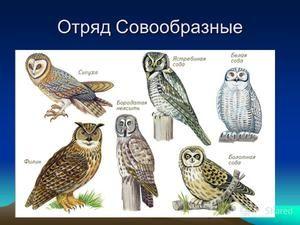 Typy sov, ich mená a vlastnosti