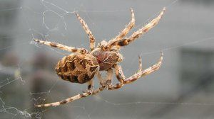 Pavúk a jeho štruktúra
