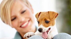 Vek psov podľa ľudských štandardov