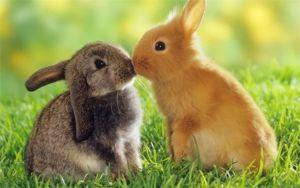 Viete, ako sa králiky líšia od králikov?