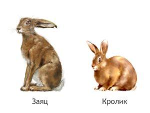 Králiky a zajace sú tak odlišné, že ich nemožno prekrížiť