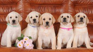 Krásne prezývky pre psy