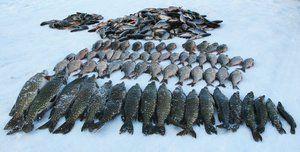 Rybolov v regióne Kemerovo