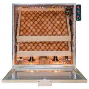 Násadové vajcia v automatickom inkubátore
