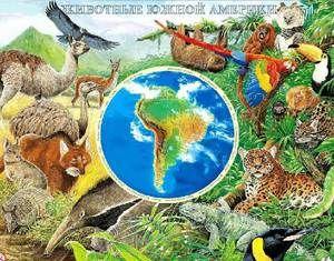 Ktoré zvieratá žijú v Južnej Amerike